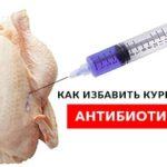 Действенный рецепт: как убрать из курицы антибиотики!